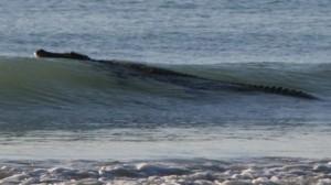 STARE DE ALERTĂ. O plajă din Australia a fost închisă din cauza unui MONSTRU! VIDEO