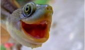cute-animals-happy-smiling-turtle-tortoise-face-pics