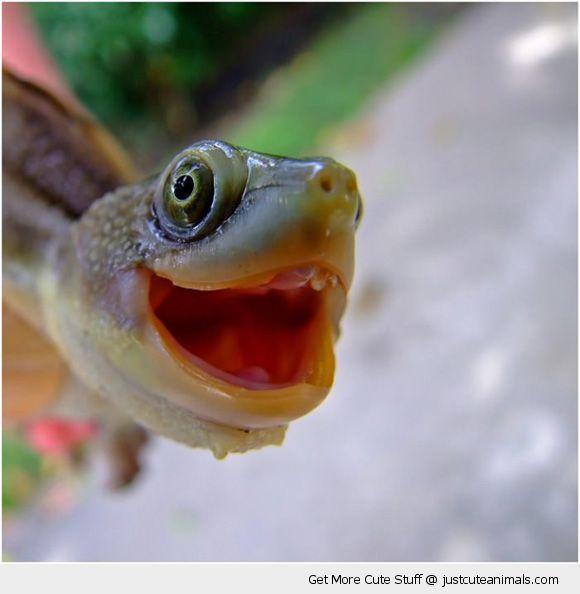 cute-animals-happy-smiling-turtle-tortoise-face-pics