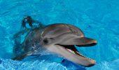 SUPOZIȚIE. O nou simț UIMITOR pe care l-ar avea delfinii ar putea fi scos la lumină