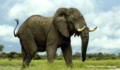 STUDIU. Inteligența elefanților nu e doar un mit! Iată de ce