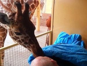 ÎNDUIOȘĂTOR. Aflat pe patul de moarte, a cerut să mai vadă o dată animalele pe care le-a îngrijit!