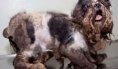 ASTA înseamnă să ai grijă de un animal. Un câine s-a schimbat ULUITOR după ce a fost adunat de pe STRĂZI!