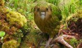Au salvat un pui de papagal inca de cand era EMBRION! Afla ce solutie ingenioasa au gasit oamenii