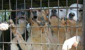Belgienii sunt în ALERTĂ. Câini maidanezi din România, transportați ILEGAL către Glabbeek