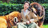 RECORD. Un câine din rasa MASTIFF TIBETAN a fost vândut cu o sumă ULUITOARE!