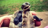 o-CUTE-SMILING-TURTLE-facebook
