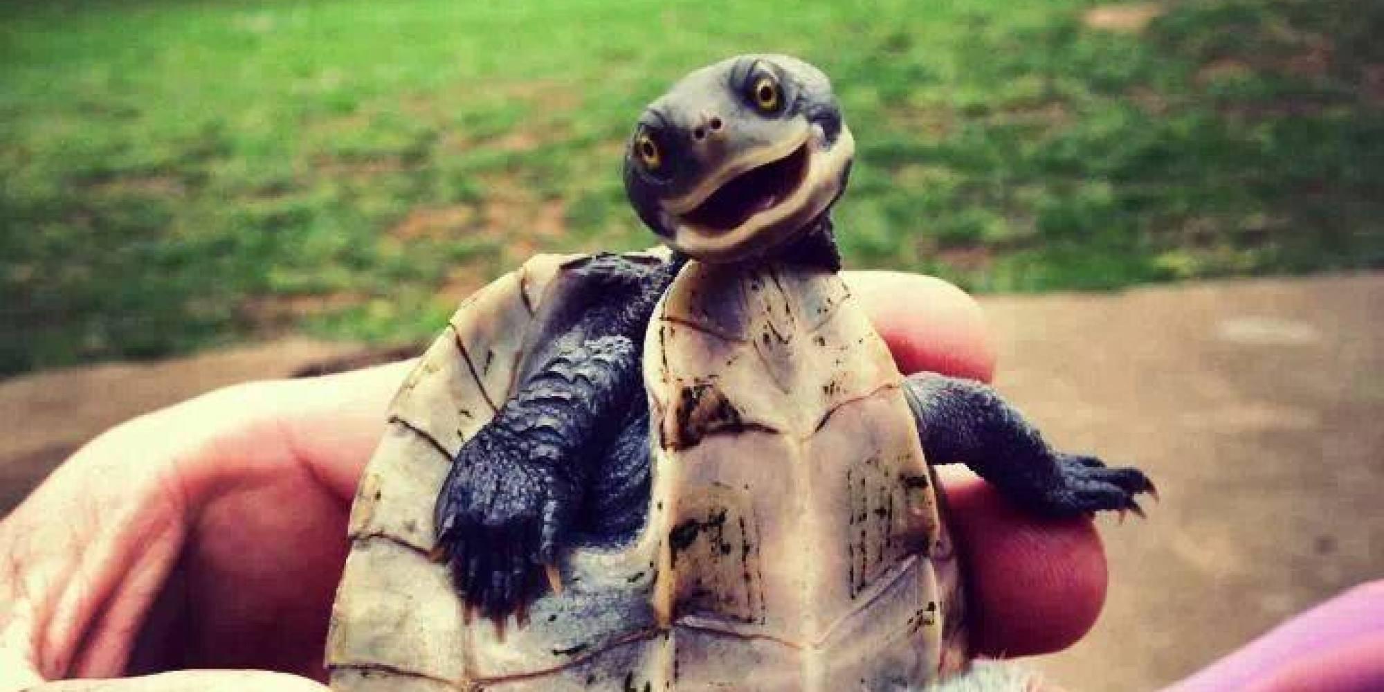 o-CUTE-SMILING-TURTLE-facebook