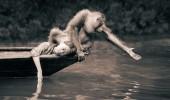 oameni si animale 6