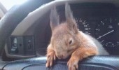 officer-squirrel4