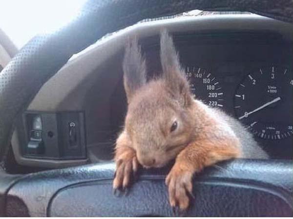 officer-squirrel4