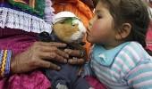 peru-guinea-pig-festival