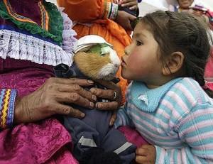 FESTIVAL MACABRU în PERU. Porcușorii de Guineea sunt sărbătoriți, apoi mâncați!