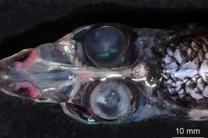 Din adâncurile oceanelor, o CREATURĂ nemaivăzută a fost scoasă la lumină!