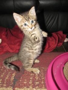 E pisică! Ba nu, e dinozaur! Felina care a impresionat lumea virtuală