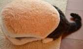 pisica- burger 2