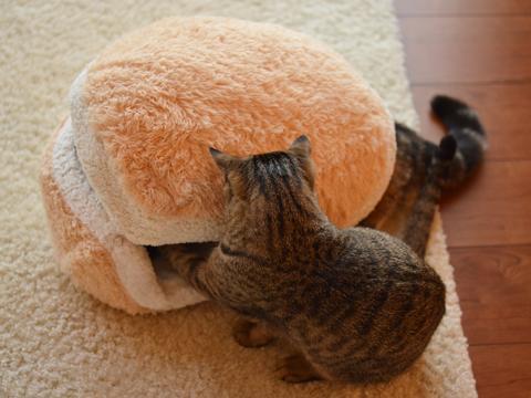 pisica burger 3