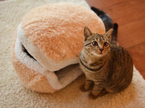 pisica- burger 4