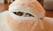 pisica- burger 5