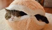 pisica- burger 6