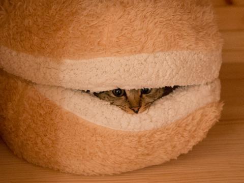 pisica- burger 7