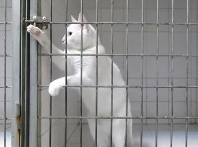 Nimic nu poate opri acest MOTAN! Felina este expertă în EVADĂRI! VIDEO