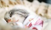 pisica somn