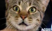 """Pisica mea a cazut de la balcon si acum e de negasit. Unde sa o mai caut?"""