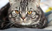 Aniversare mondiala pentru pisica!