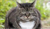 Cea mai vârstnică pisică din lume a împlinit 27 de ani