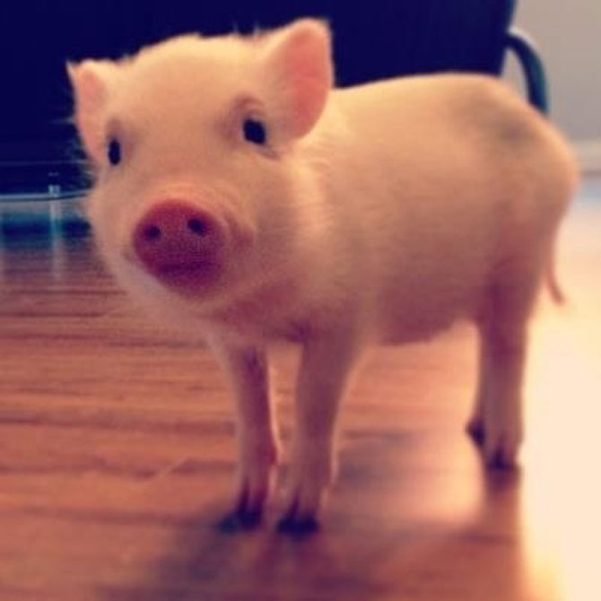 porc 10