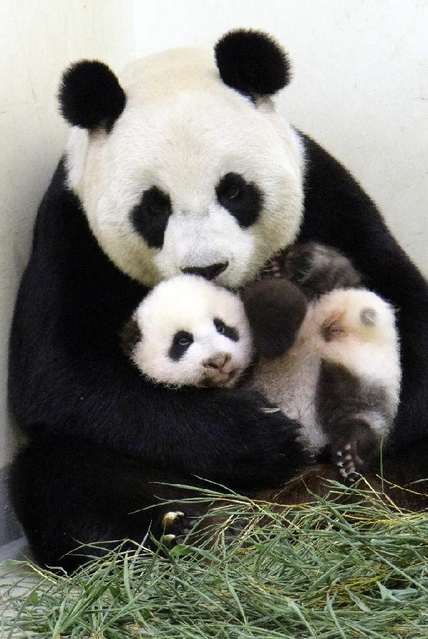 Iubirea mamei pentru puiul ei e nemarginita