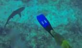 rechin_81280800