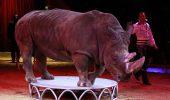 Clujenii au fost chemați să BOICOTEZE circul cu ANIMALE