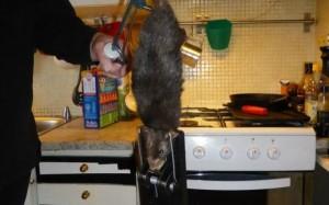 NECAZURI. O familie A FOST SCOASĂ DIN MINȚI de un șobolan URIAȘ!