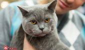 Admira cele mai frumoase pisici din lume pe AnimalZoo, daca nu ai ajuns in weekend la SOFISTICAT!