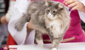De ce Primaria Capitalei vrea să interzică folosirea animalelor în spectacole și expoziții