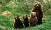 O ursoaică și puii ei au băgat SPAIMA în localnicii din Băile Homorod