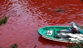 Secret Dolphin Cove in Taiji Japan, site of annual dolphin slaughter