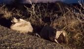 Caini morti in saci aruncati la marginea Constantei