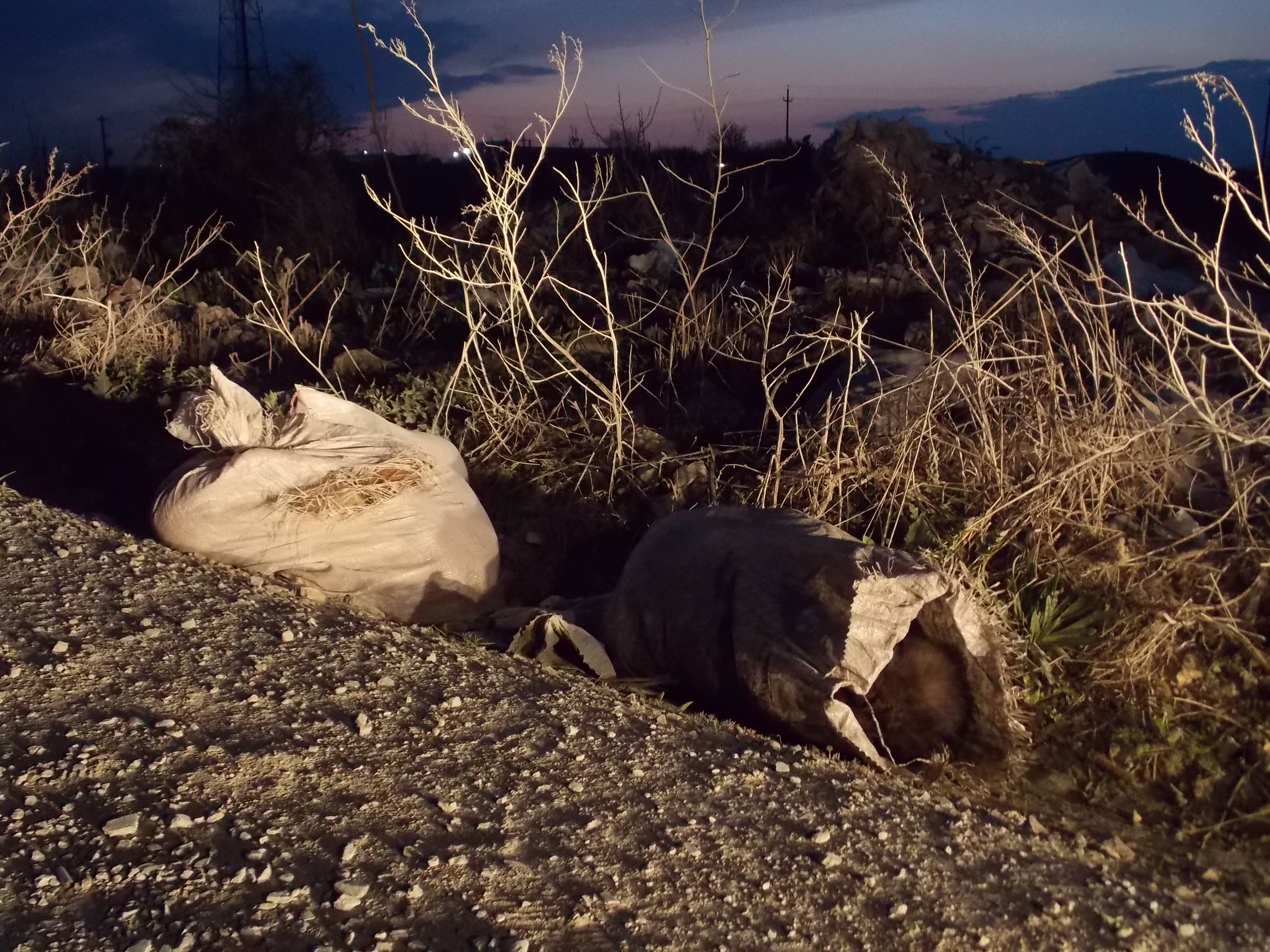 Caini morti in saci aruncati la marginea Constantei  - Copy