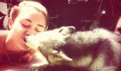 Miley-Cyrus-got-kiss-from-her-dog-Floyd