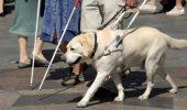 Câini-ghid plătiţi de stat pentru nevăzători sau alţi oameni cu dizabilităţi!