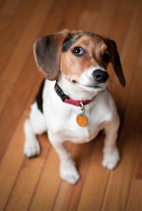 Vreau un câine! Ce aleg? Un mascul sau o femelă?