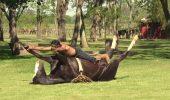 Cea mai bizară artă de îmblânzire a cailor sălbatici: YOGA