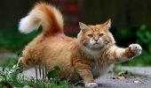 Presa a interpretat greşit un studiu despre mângâierea pisicilor. Animal Zoo îţi spune adevãrul!