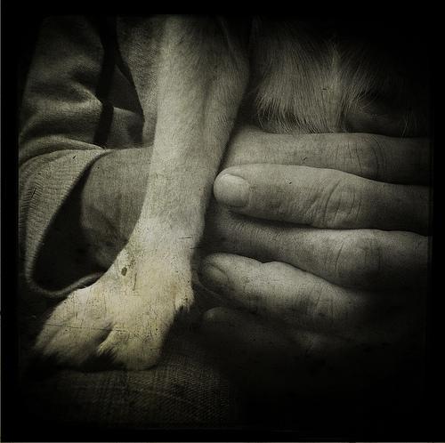 Clipul zilei! Un om al străzii a fost aşteptat de câinele său 8 zile în faţa spitalului. Reacţia patrupedului îţi umple inima de bucurie!