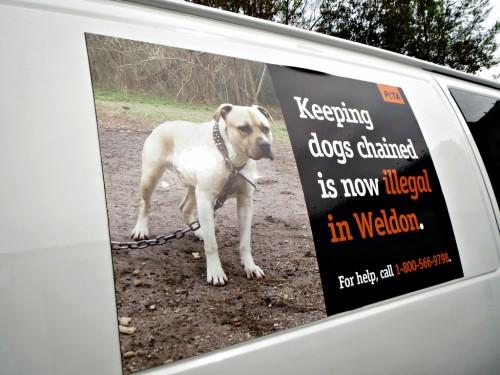 S-a dat LEGE: E ilegal să ţii un câine în LANŢ!