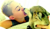 miley-cyrus-dogs1