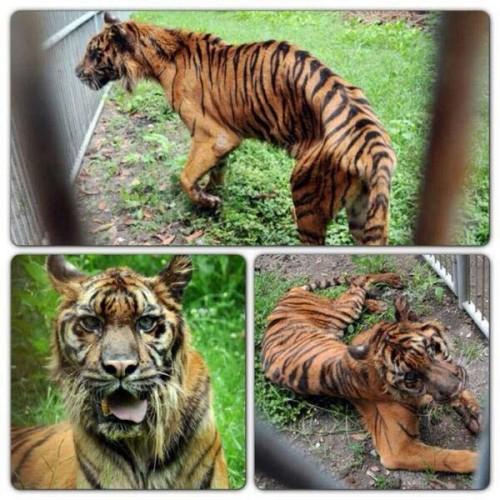 S-a redeschis o grădină zoologică în România